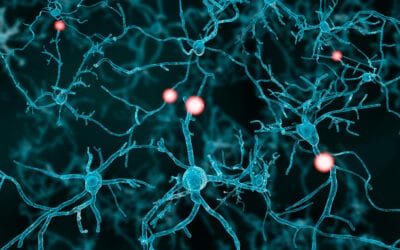 Autism protein may shape neuronal firing patterns